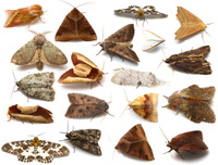Spring_moth_small