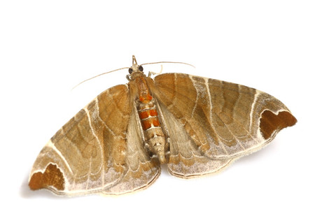Moth_from_mttakanawa10_2