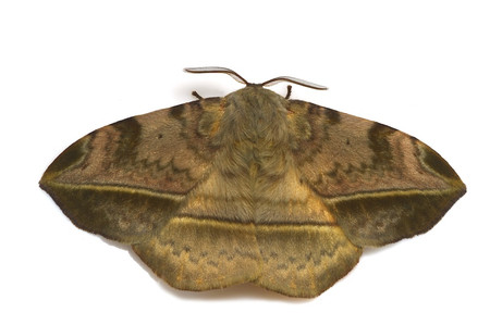 Moth_from_mttakanawa13_2