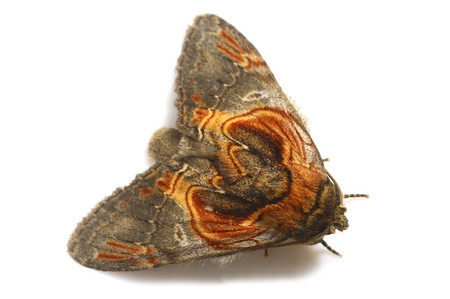 Moth_from_mttakanawa15_2