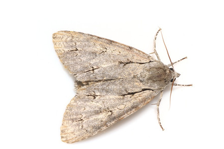 Moth_from_mttakanawa2_4
