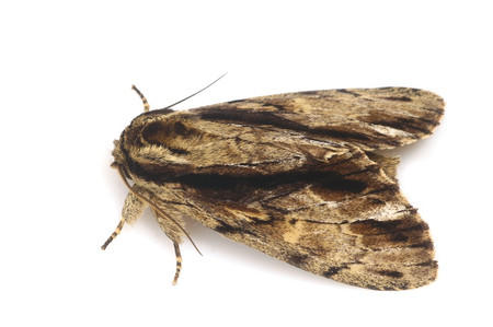 Moth_from_mttakanawa4_2