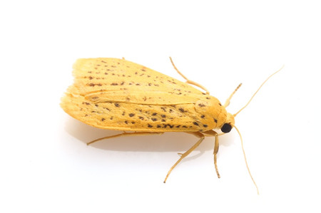 Moth_from_mttakanawa5_2