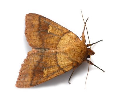 Moth_from_mttakanawa8_2