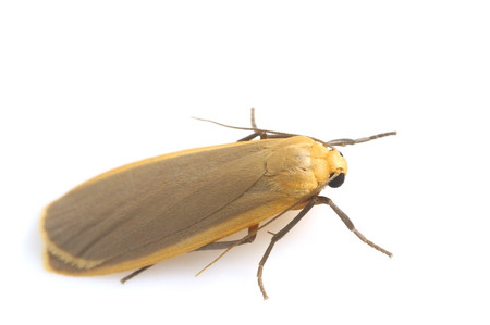 Moth_from_mttakanawa9_2
