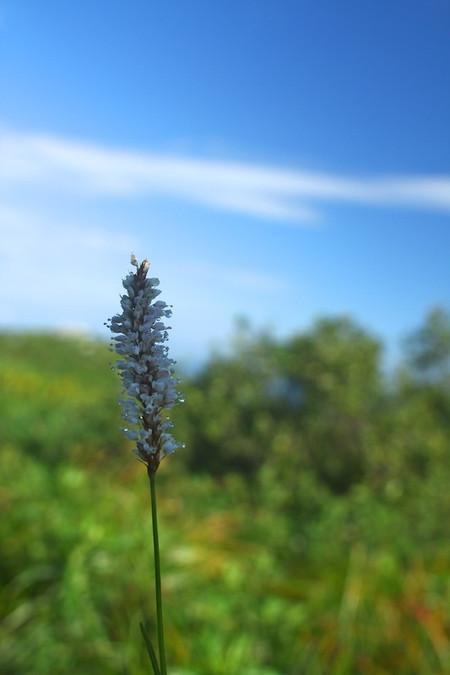 Mtibuki_flower12