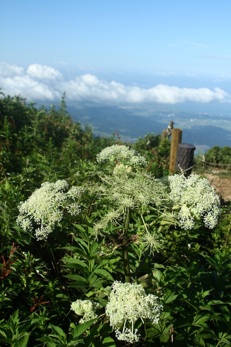 Mtibuki_flower14
