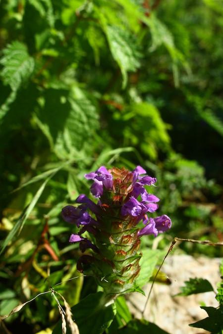 Mtibuki_flower16