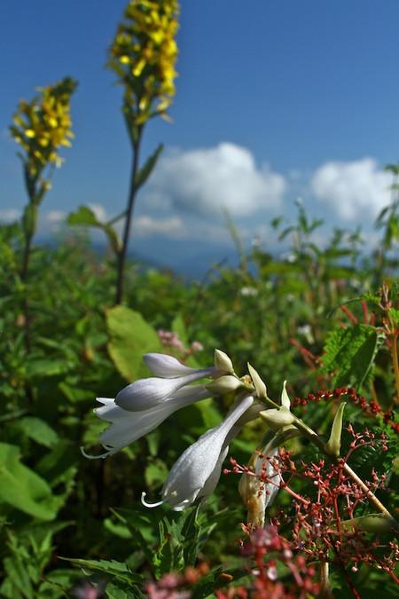 Mtibuki_flower17