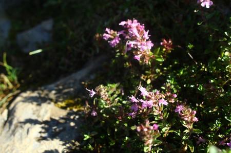 Mtibuki_flower19