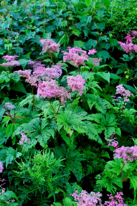 Mtibuki_flower2