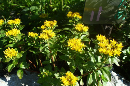 Mtibuki_flower21