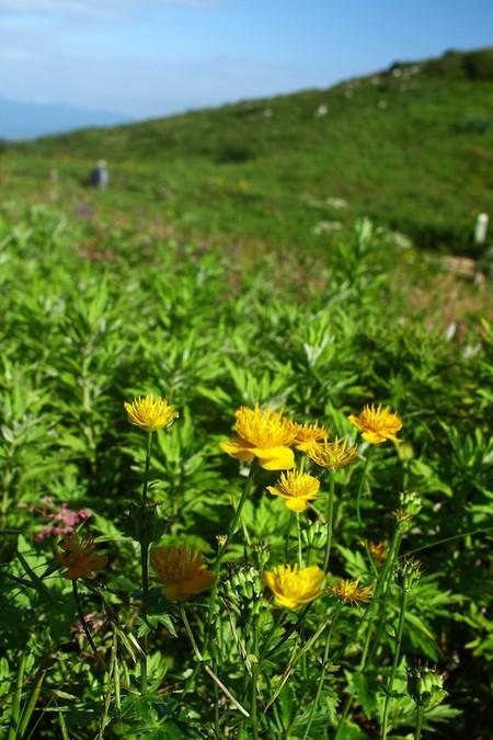 Mtibuki_flower22