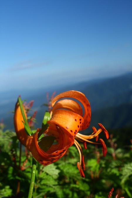 Mtibuki_flower4