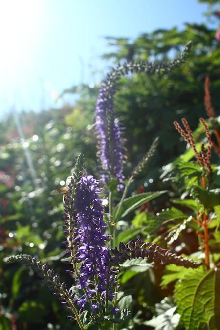 Mtibuki_flower6