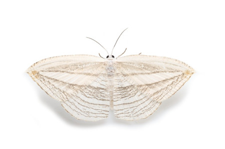 Moth_collected_from_iyoshi1