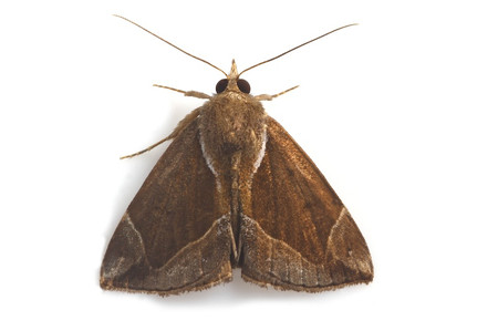 Moth_collected_from_iyoshi7