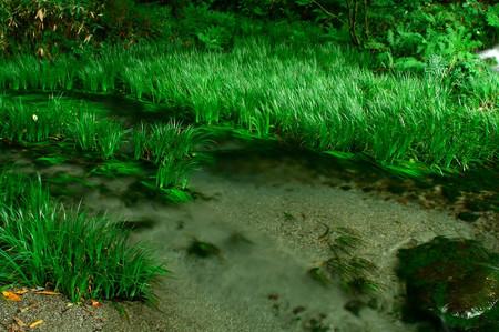 Ikeyama_spring_water_spot1