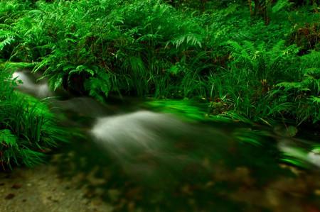 Ikeyama_spring_water_spot13