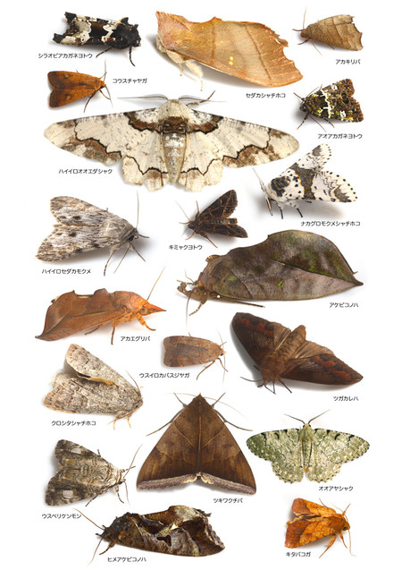 All_species_of_moths_collected_from