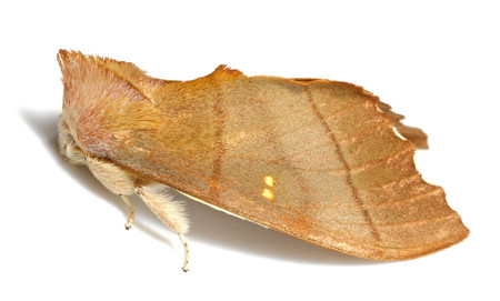 Moths_collected_from_tengukougen1