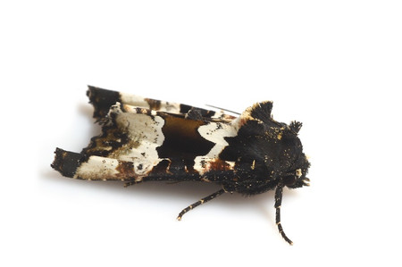 Moths_collected_from_tengukougen2