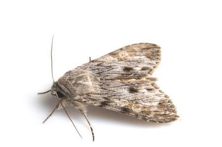 Moths_collected_from_tengukougen6