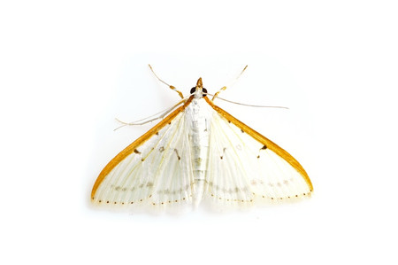 Moths_obtained_from_mtsaragamine__2