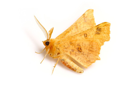Moths_obtained_from_mtsaragamine__7