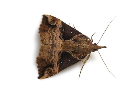 Moths_obtained_from_ishitegawadam12