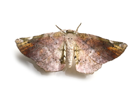 Moths_obtained_from_ishitegawadam13