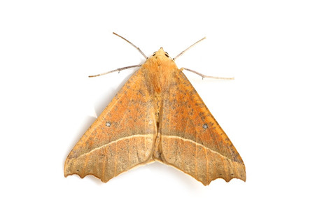 Moths_obtained_from_ishitegawadam3