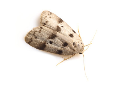 Moths_obtained_from_ishitegawadam5