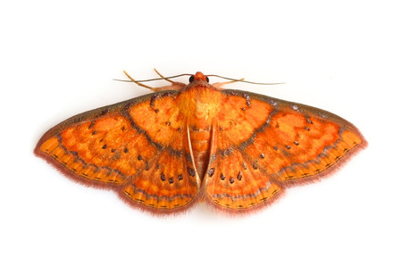 Moths_obtained_from_ishitegawadam7