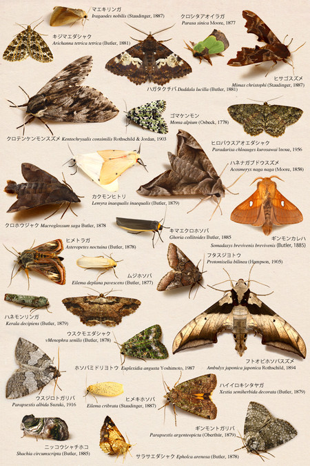 Commonmothspecies_collected_from_mt