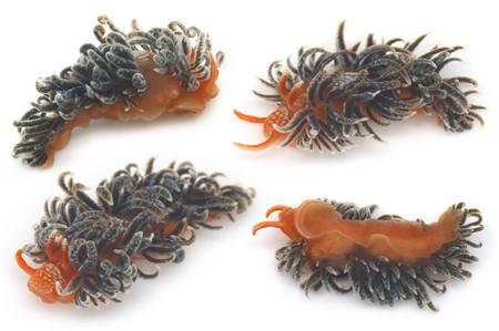 Sea_slug