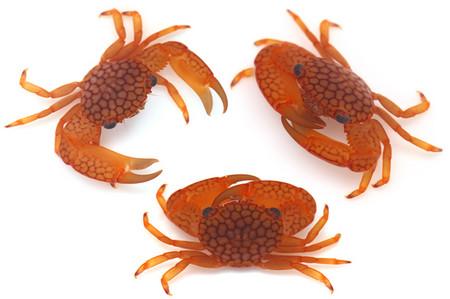 Coral_crab_sp