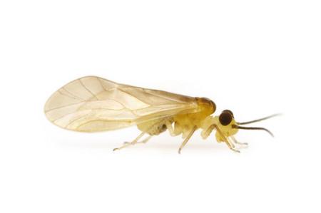 Caecilidae_sp_002